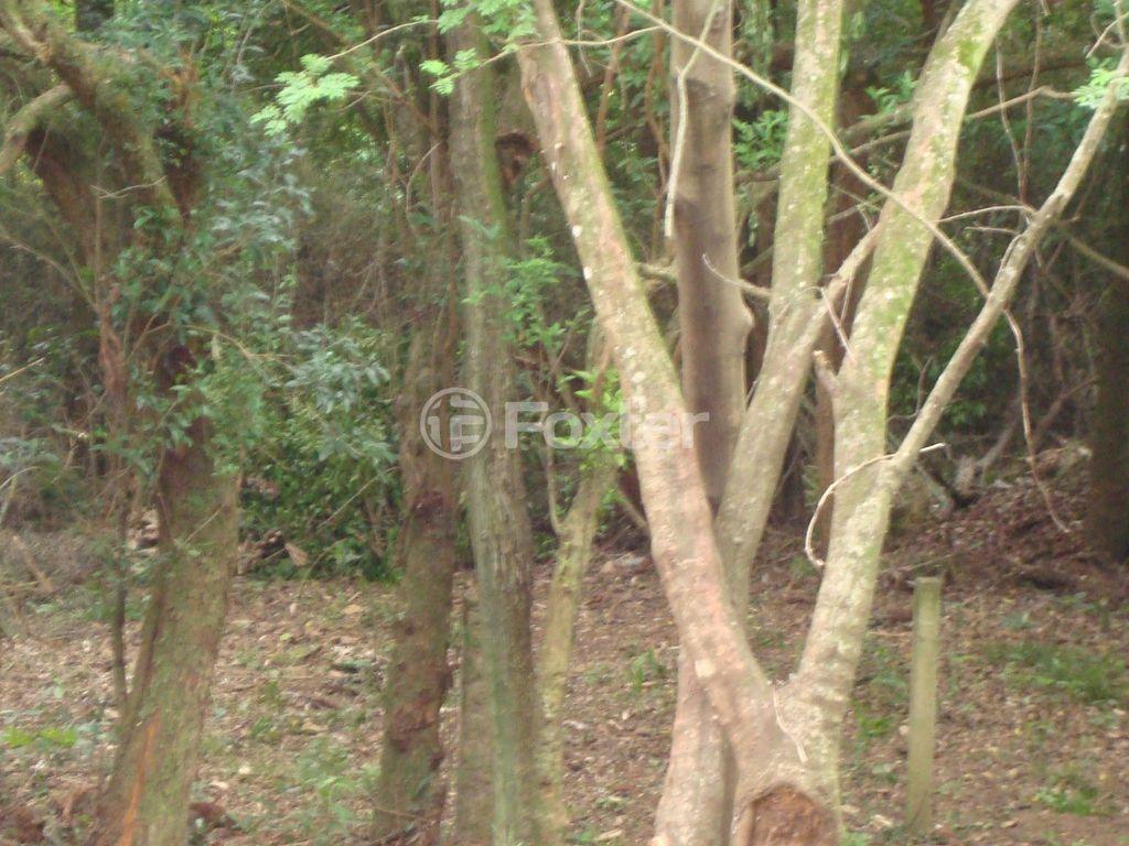 Foxter Imobiliária - Casa 2 Dorm, Teresópolis - Foto 44